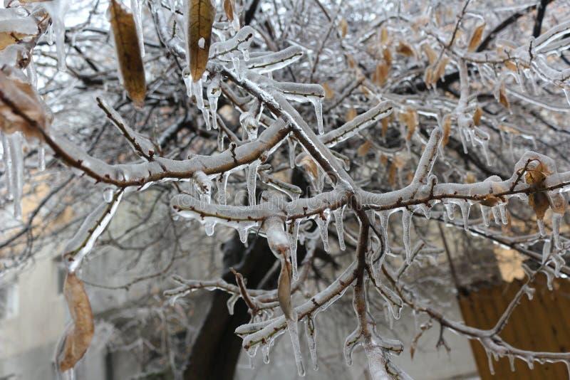 El hielo ha dominado los árboles fotografía de archivo libre de regalías
