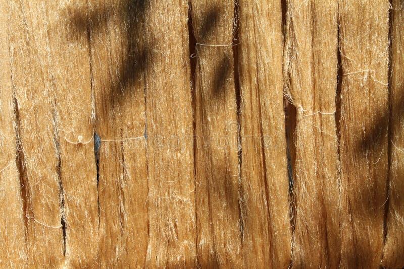 El hilo de seda durante deseca fotografía de archivo libre de regalías