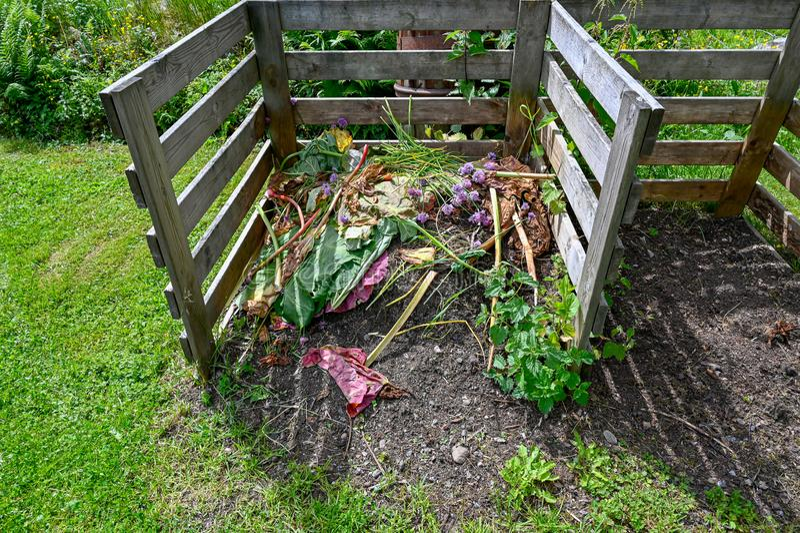 El hogar hizo el estiércol vegetal del jardín con las hojas del ruibarbo imagen de archivo