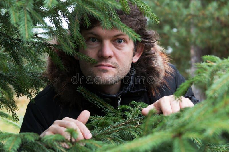 El hombre barbudo con las gafas redondas grandes observa la mirada fuera del bosque a través de las ramas jovenes de abetos Hombr imagen de archivo libre de regalías