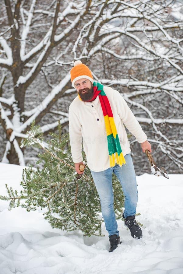 El hombre barbudo est? llevando el ?rbol de navidad en la madera Un hombre joven hermoso con una barba lleva un ?rbol de navidad  imágenes de archivo libres de regalías