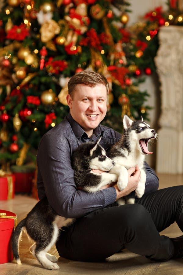 El hombre con los perritos fornidos en la Navidad que se sienta en un backgro imágenes de archivo libres de regalías