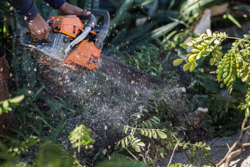 El hombre corta el árbol de la tala con la motosierra Para trabajar sin seguridad imagenes de archivo