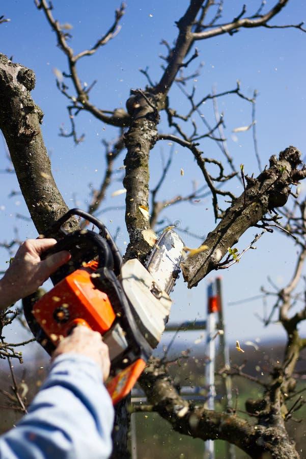 El hombre corta ramas de árbol con una motosierra foto de archivo libre de regalías