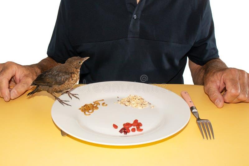 El hombre da para comer el pájaro en una placa limpia imagenes de archivo