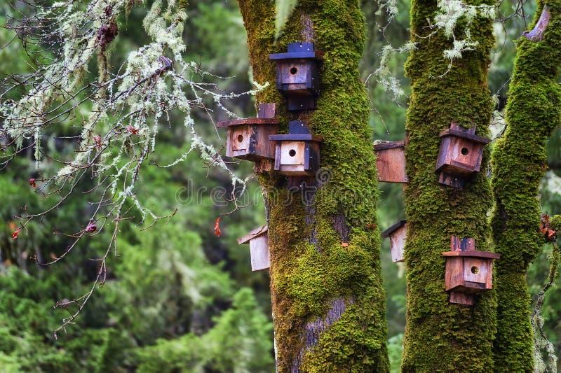 El hombre de las casas del pájaro hizo en un bosque imagenes de archivo