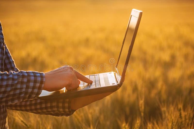 El hombre de negocios está en un campo del trigo maduro y sostiene un ordenador portátil en sus manos imagenes de archivo