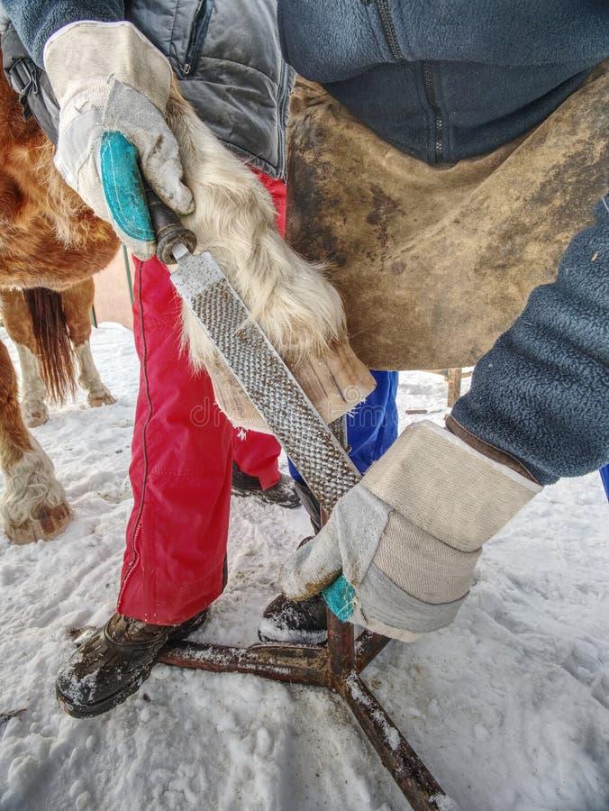 El hombre del forjador de la granja despeja con especial la escofina el enganche del caballo imagen de archivo libre de regalías