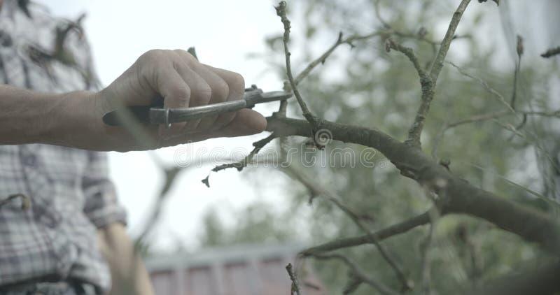 El hombre desconocido está cortando las viejas ramas con el pruner en el jardín Comcept de la agricultura cantidad 4k Cámara roja fotos de archivo libres de regalías