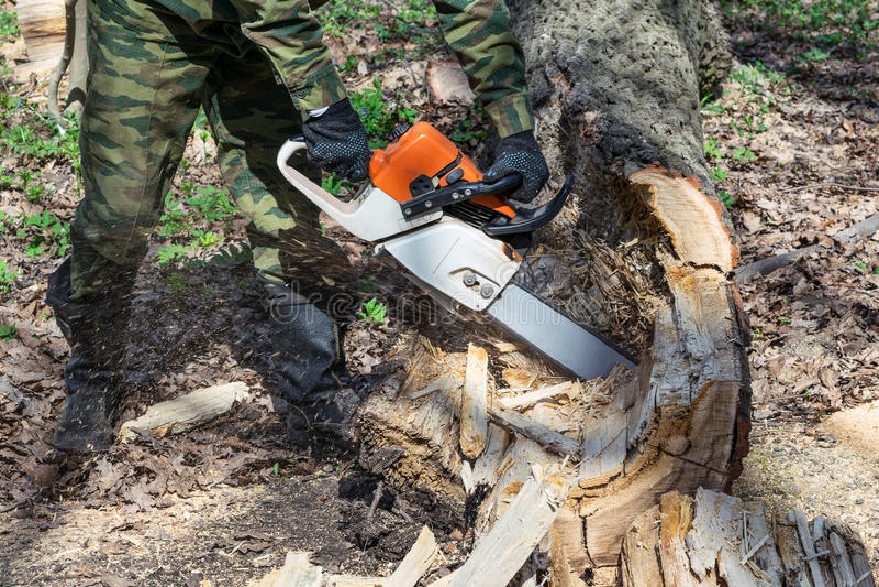 El hombre en camuflaje, botas y guantes asierra el árbol putrefacto viejo de la motosierra en el bosque imagenes de archivo