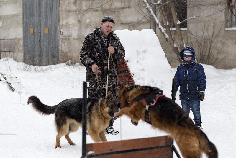 el hombre entrena al pastor alemán, invierno, editorial fotos de archivo libres de regalías