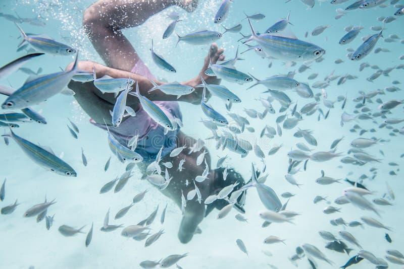 El hombre está buceando en agua maravillosa del ` s del océano imagenes de archivo
