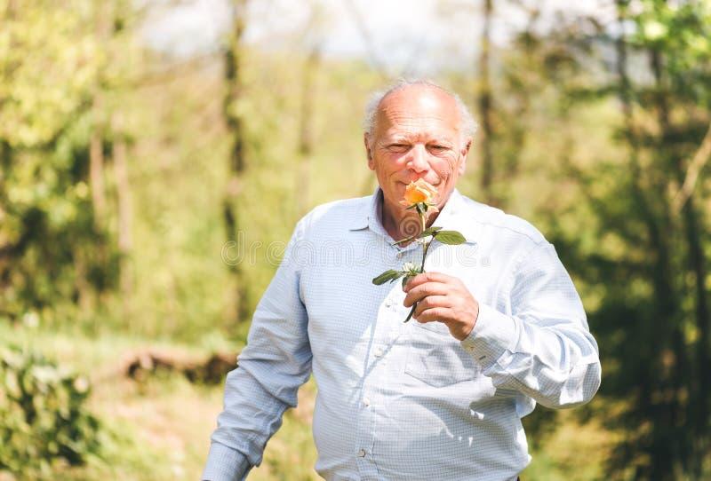 El hombre mayor huele el olor color de rosa imagen de archivo