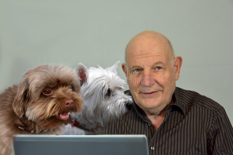 El hombre mayor trabaja en su ordenador, sus perros está intentando ayudarle fotos de archivo libres de regalías
