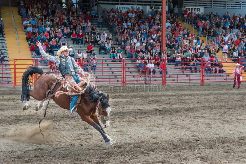 El hombre monta el caballo bucking en la competencia del bronc de la silla de montar en la precipitación imagenes de archivo