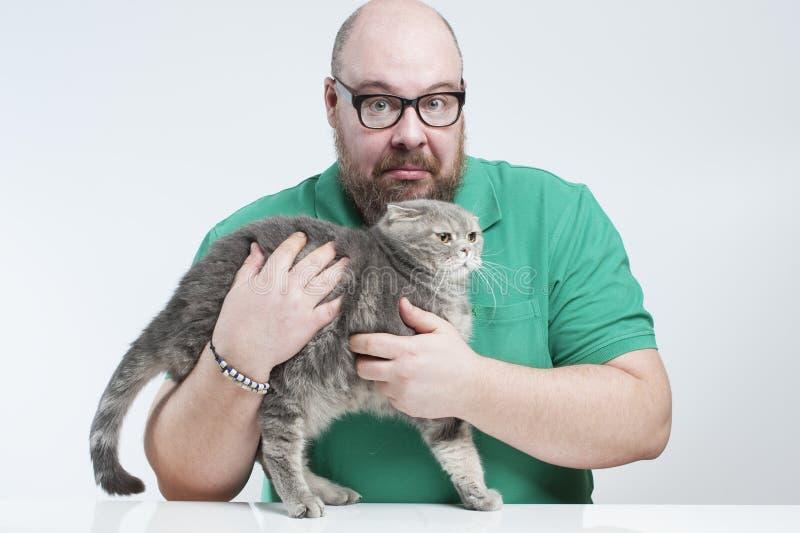 El hombre que detiene a un escocés asustado de la raza del gato dobla foto de archivo libre de regalías