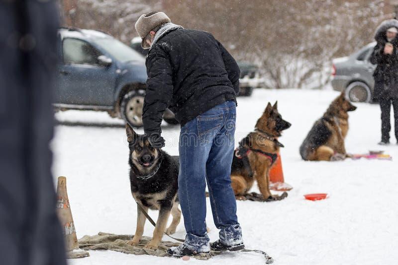 El hombre que entrena a un pastor alemán en el invierno imagen de archivo libre de regalías
