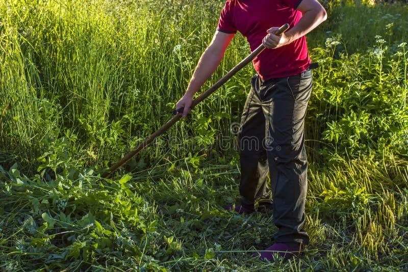 El hombre siega la hierba usando una guadaña foto de archivo libre de regalías