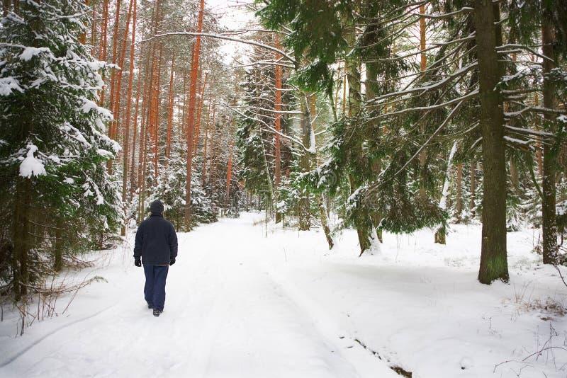 El hombre solo camina a través del bosque del invierno imagen de archivo libre de regalías