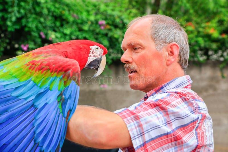 El hombre sostiene el macaw rojo en el brazo afuera imágenes de archivo libres de regalías