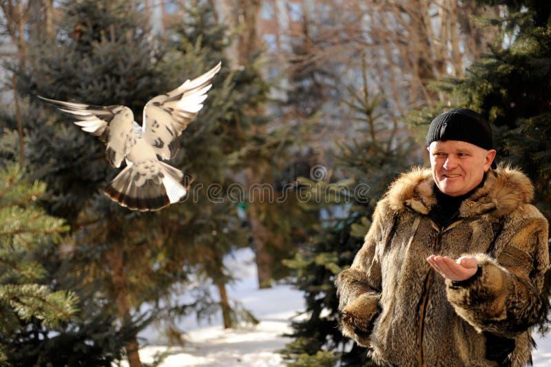 El hombre vino al parque en el invierno alimentar titmouses y palomas imágenes de archivo libres de regalías