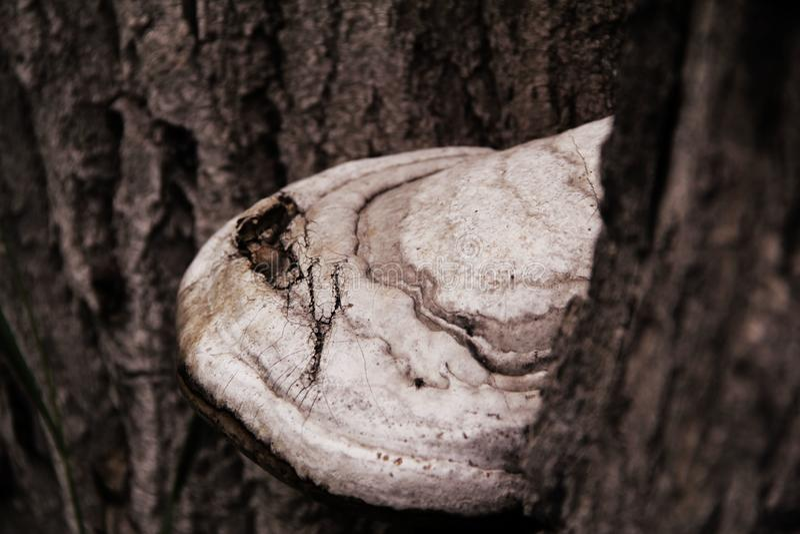 El hongo crece en un árbol imagen de archivo
