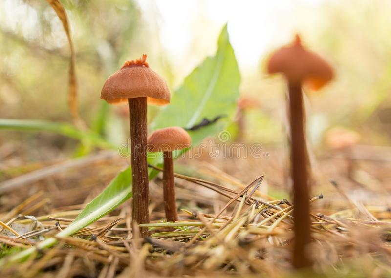 El hongo no comestible crece en el bosque al aire libre imágenes de archivo libres de regalías