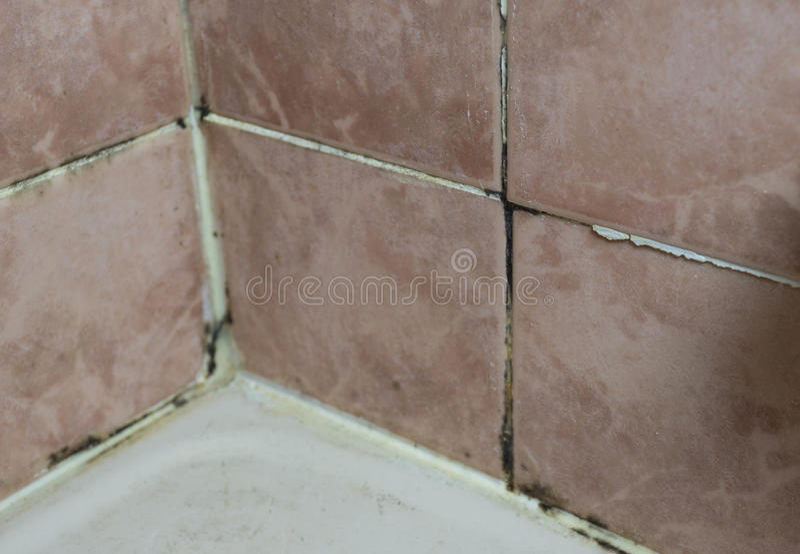 El hongo que crece en la teja articula la esquina de la pared del cuarto de baño fotos de archivo libres de regalías