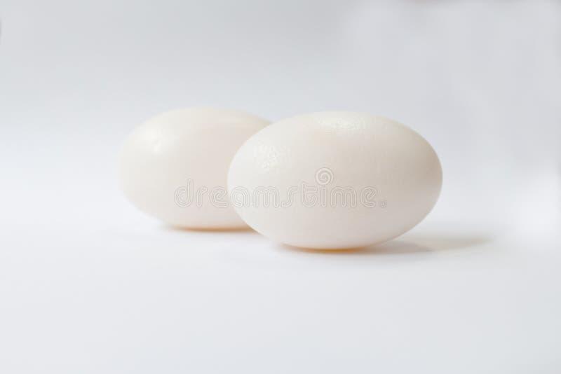 El huevo del cocodrilo con el fondo blanco foto de archivo