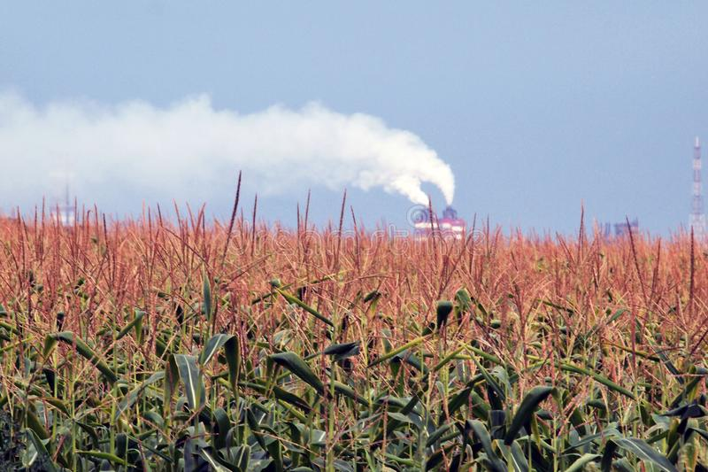 El humo blanco, grueso, tóxico emana de la chimenea de la fábrica foto de archivo