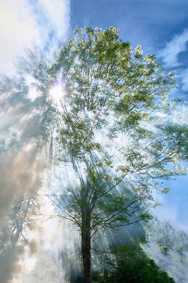 El humo del fuego entre los árboles en el sol contra el cielo azul imagenes de archivo