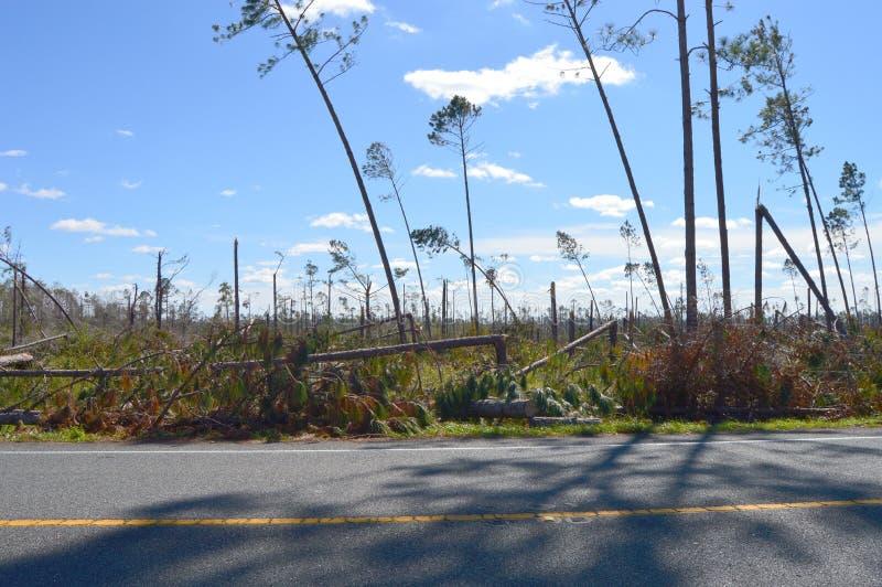 El huracán dañó árboles imagen de archivo