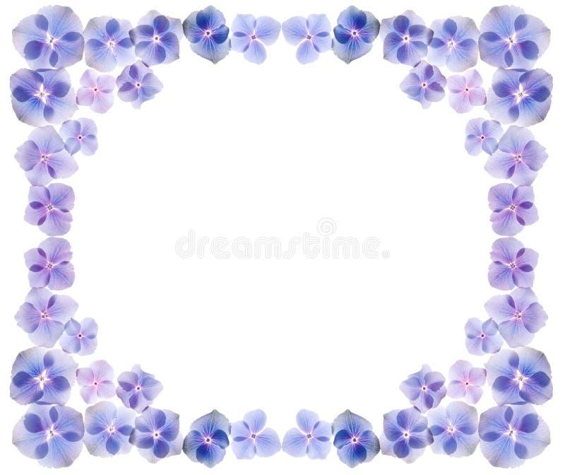 El Hydrangea florece el marco ilustración del vector