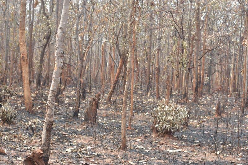 El incendio forestal quema bosques tropicales imágenes de archivo libres de regalías