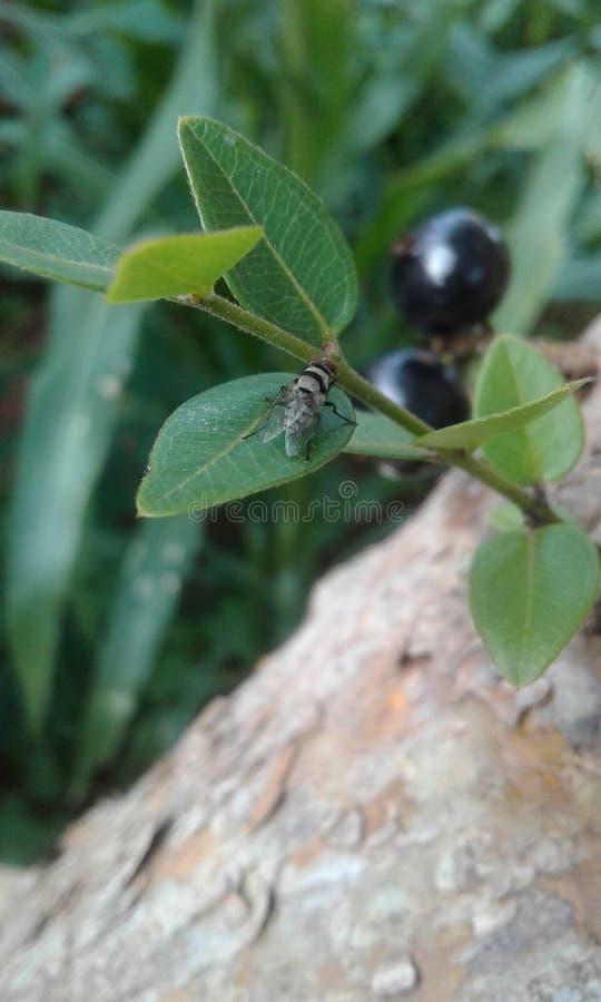 El insecto foto de archivo libre de regalías