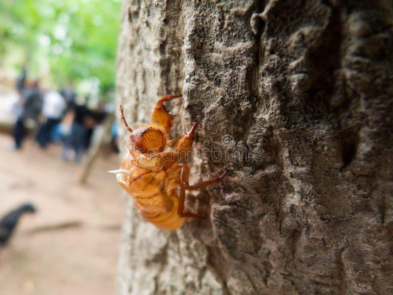El insecto imágenes de archivo libres de regalías