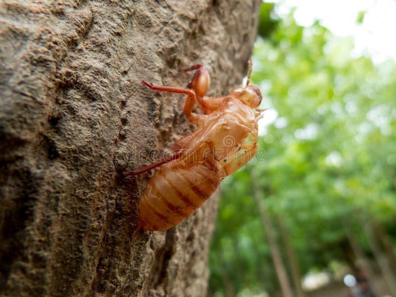 El insecto imagenes de archivo