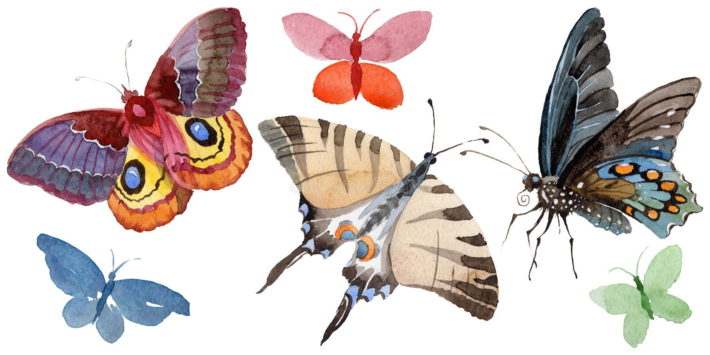 El insecto de la oferta de la mariposa de la acuarela, polilla intresting, aisló el ejemplo del ala ilustración del vector