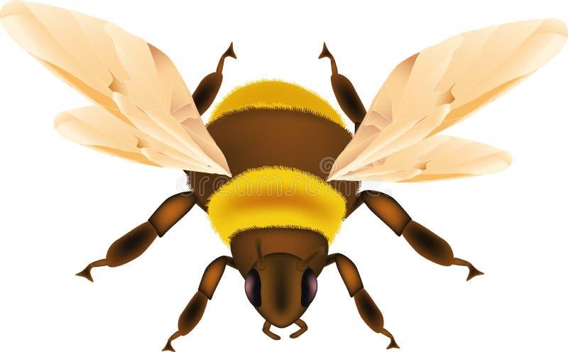 El insecto manosea la abeja ilustración del vector