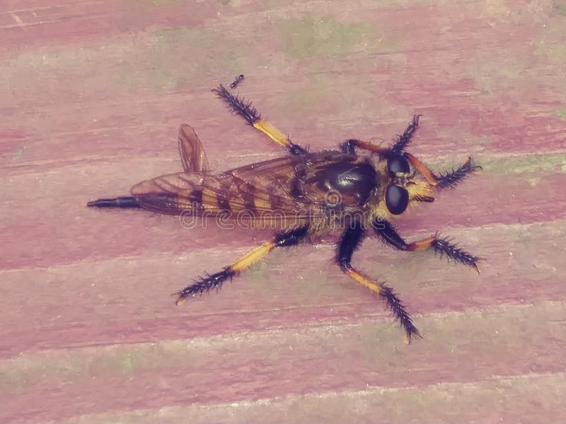 El insecto observó maravillas imagenes de archivo