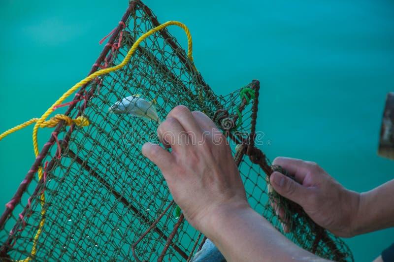 El intento del pescador a desempaquetar atrapó pescados de la red de pesca con el fondo del mar azul foto de archivo