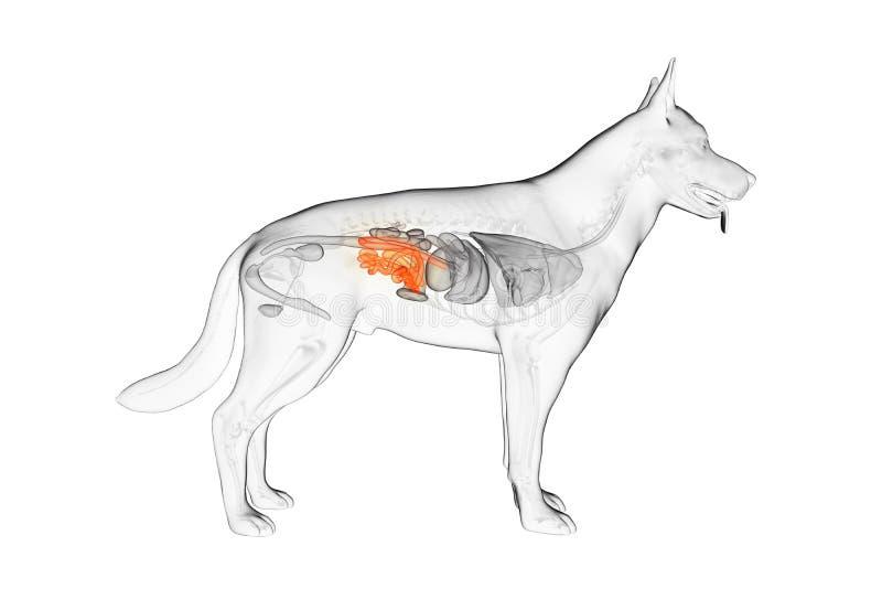 El intestino delgado canino stock de ilustración