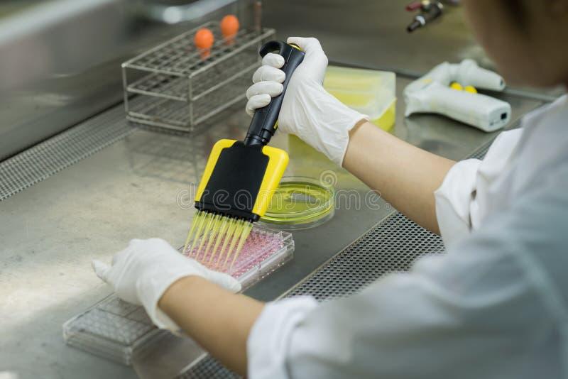 El investigador transfiere el líquido de prueba a la placa de 96 pozos foto de archivo libre de regalías