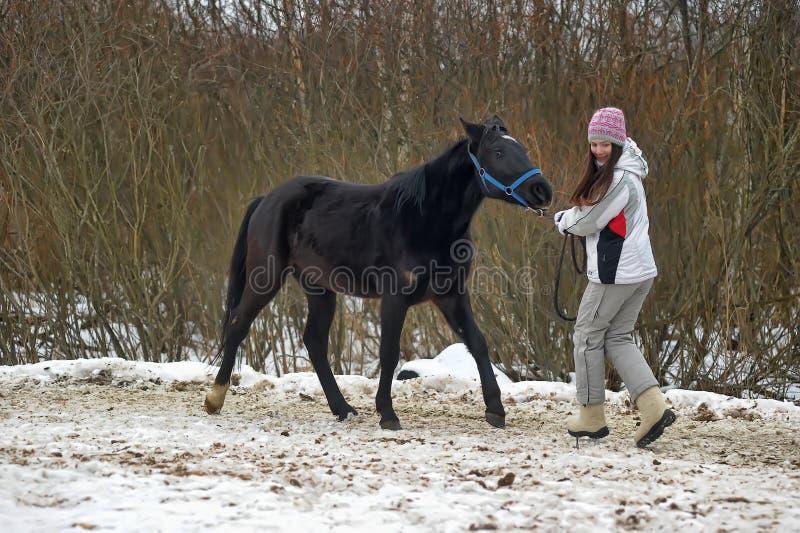 El invierno camina con el caballo imagen de archivo libre de regalías
