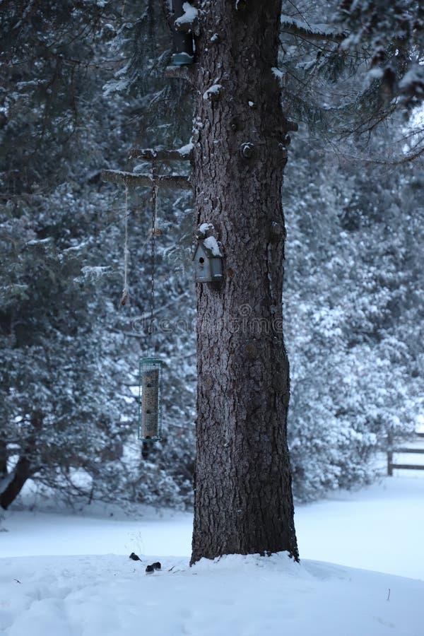 El invierno está para los pájaros fotos de archivo