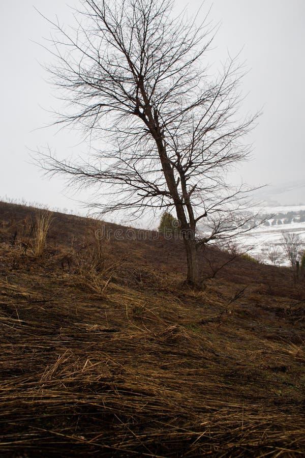 El invierno está viniendo pronto fotografía de archivo libre de regalías