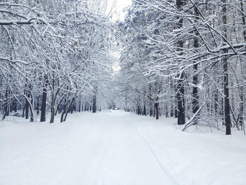 El invierno hermoso cubrió el bosque de la nieve en día nevoso imagen de archivo libre de regalías