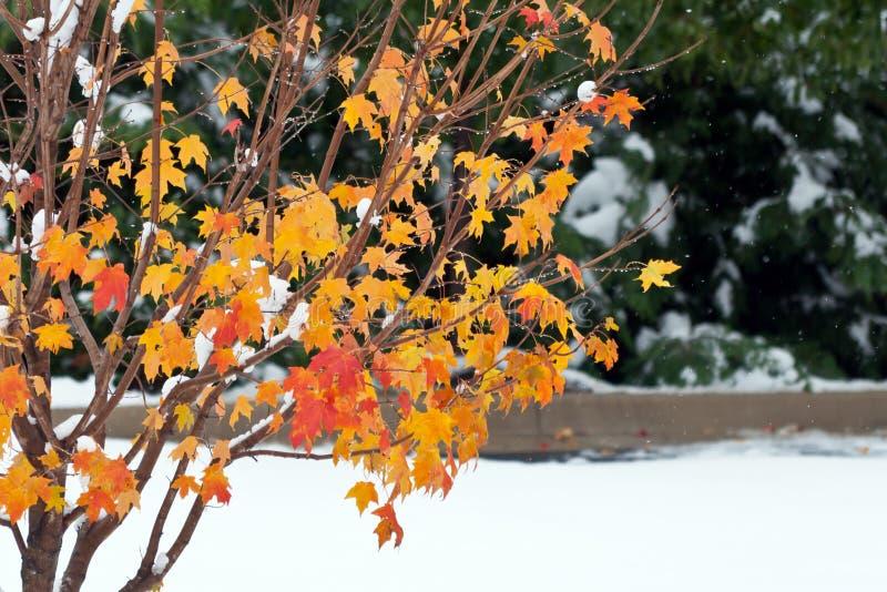 El invierno llega temprano fotografía de archivo libre de regalías