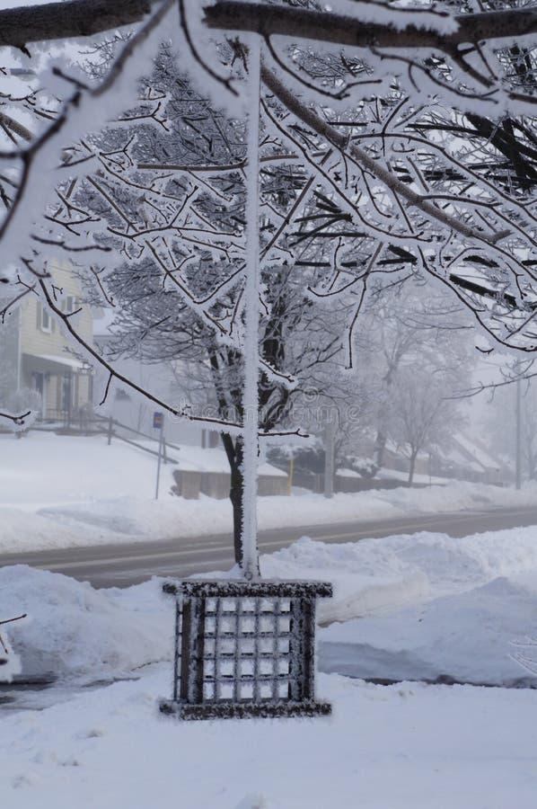 El invierno no está para los pájaros imagen de archivo