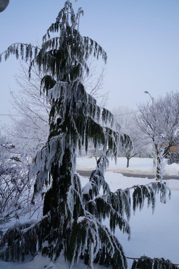El invierno no está para los pájaros fotografía de archivo